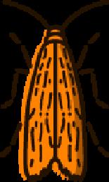 Clothes-Moths Pest Control