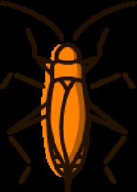 Earwigs Pest Control