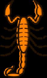 Scorpions Pest control